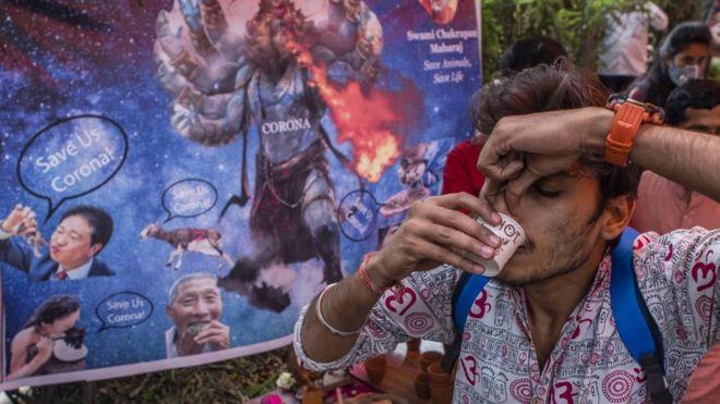 جماعة هندوسية تقيم حفلا لشرب بول البقر للوقاية من كورونا