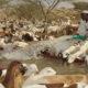 استئناف تصدير الماشية للسعودية وبرتكول لحفظ حقوق المصدرين