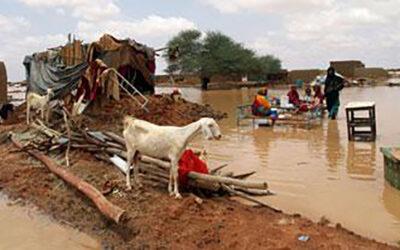 """أنقذوا الشمالية ونهر النيل من """"حميات قاتلة """" … بقلم: عواطف عبداللطيف"""