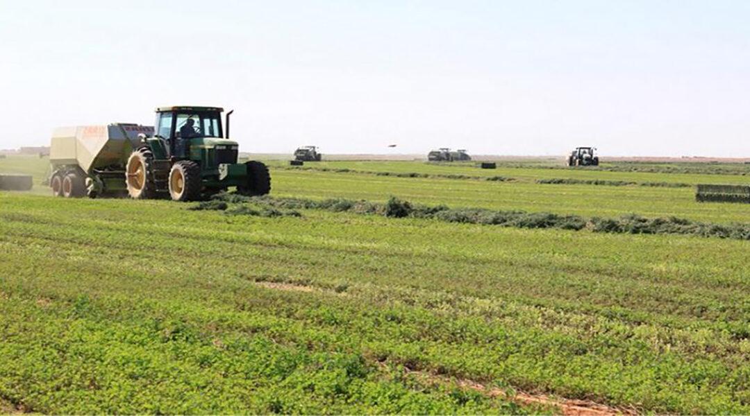 الزراعة : إتجاه لإستهداف زراعة 600 ألف فدان بالقمح بالجزيرة