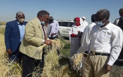 وزير الزراعة يزور مشروع كروان لزراعة الارز بأم تكال