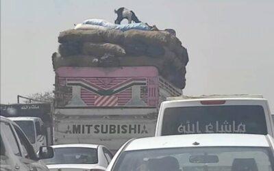 ماعز يلفت أنظار رواد التواصل الاجتماعي بسبب(..)