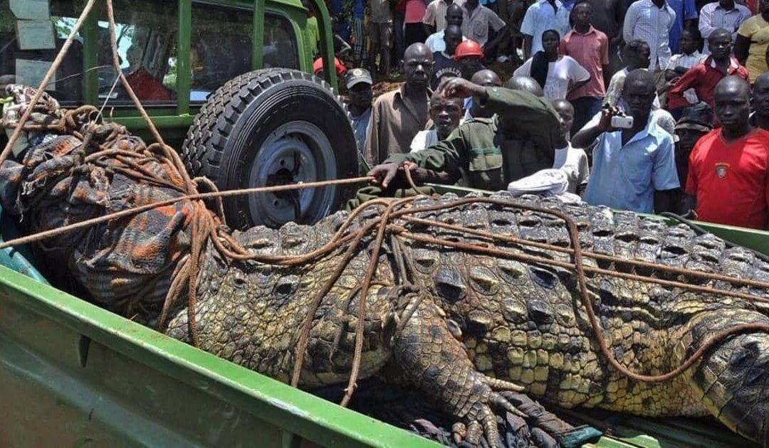 سكان قرية أوغندية يوقعون بأسامة الذي قتل ٨٠ مواطنا