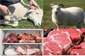نصائح الغذاء والتغذية والوقاية من الجراثيم وكيفية التعامل مع لحم الأضحية